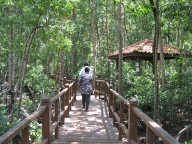 The platform walk through a mangrove forest to Tanjung Piai - tip of the Asian continent.