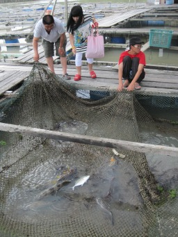 Fish farms just off the Kukup shoreline.