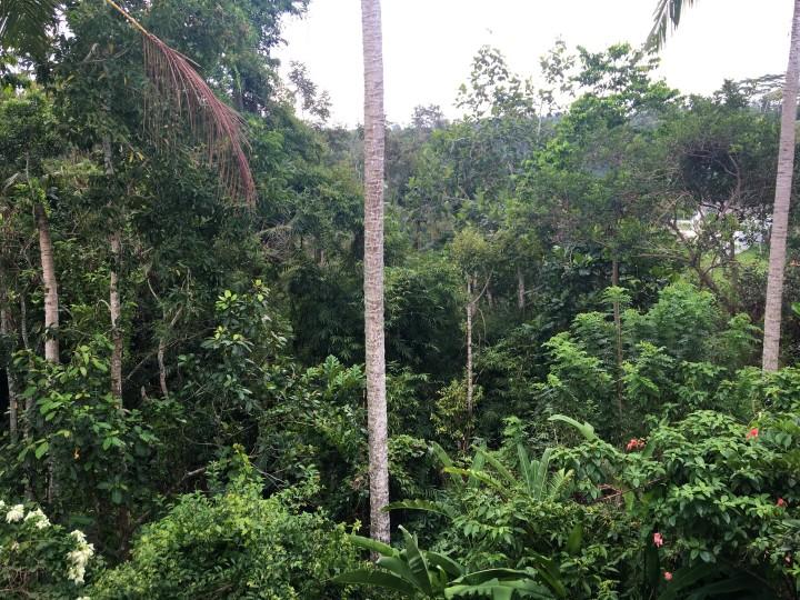 Jungle Campuhan.jpeg