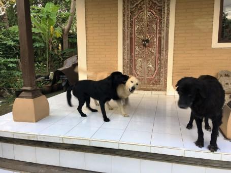 (L-R) Momo,, Mulato and Mimpi