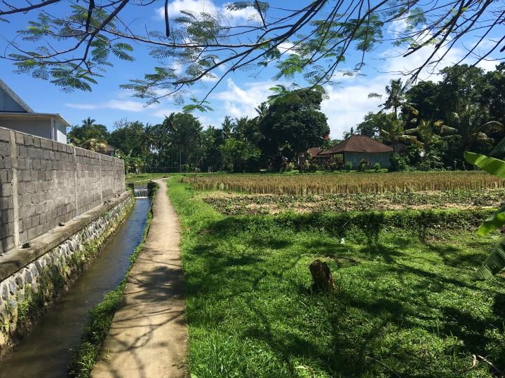 path-to-gardenia-house