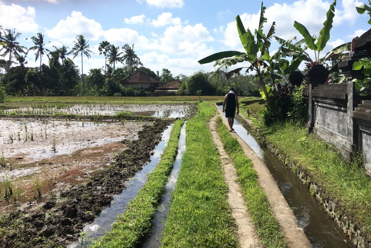 Rice Fields.jpeg